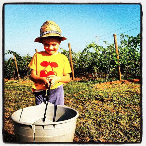 italian boy vineyard