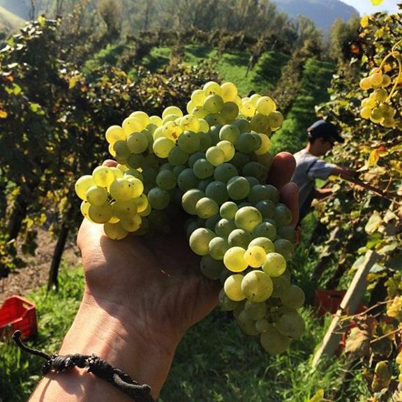 end harvest prosecco 2014