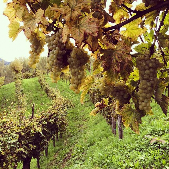 monfumo vineyard prosecco