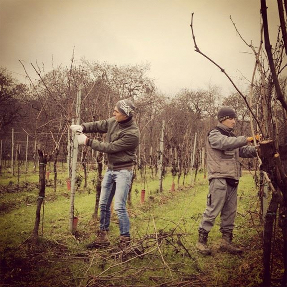 deshooting vines italy