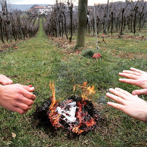 fire in the vineyards