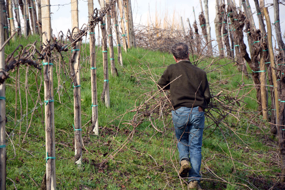 father son winery italy grape grower