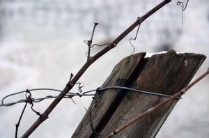 italy vineyards winter snow