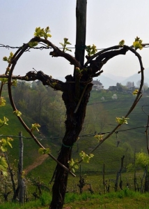valentines day italy vineyards